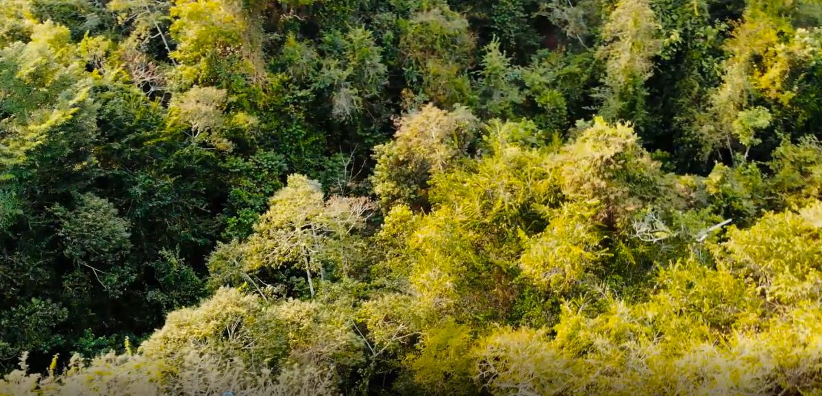 NAISA dedica espacios para la conservación de los ecosistemas imagen