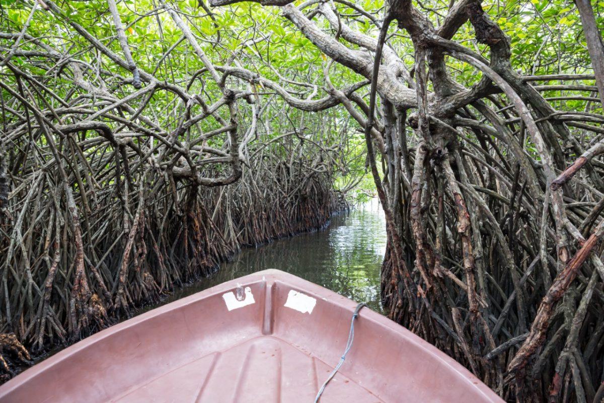 7 humedales en Guatemala,  son reconocidos como sitios Ramsar a nivel mundial. Descúbrelos !!! imagen