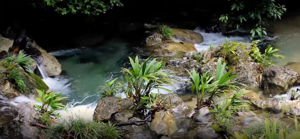 La agroindustria de aceite de palma y su esfuerzo por crear cuidados del agua imagen