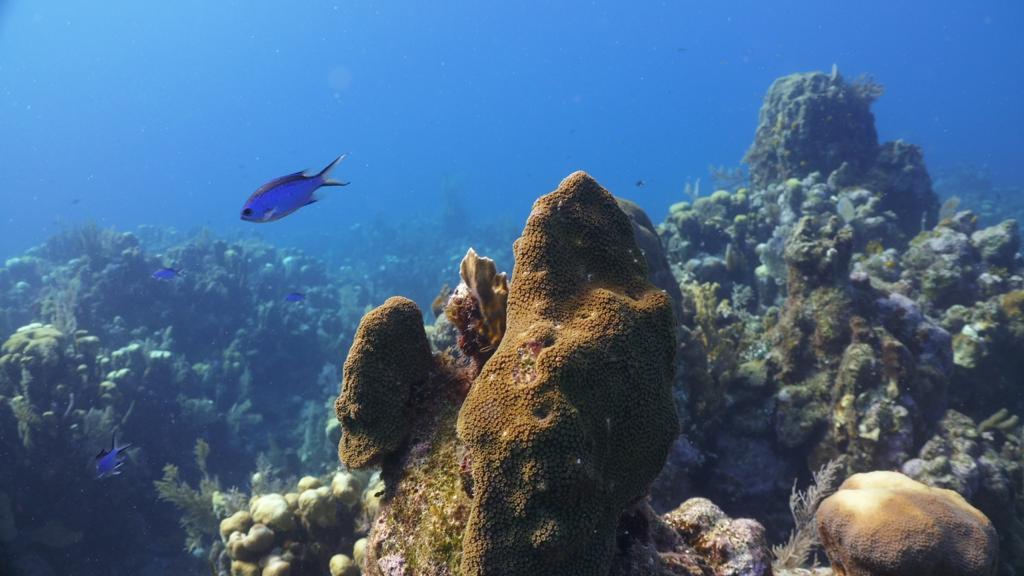 El sistema arrecifal mesoamericano, cuida y conoce sus maravillas imagen