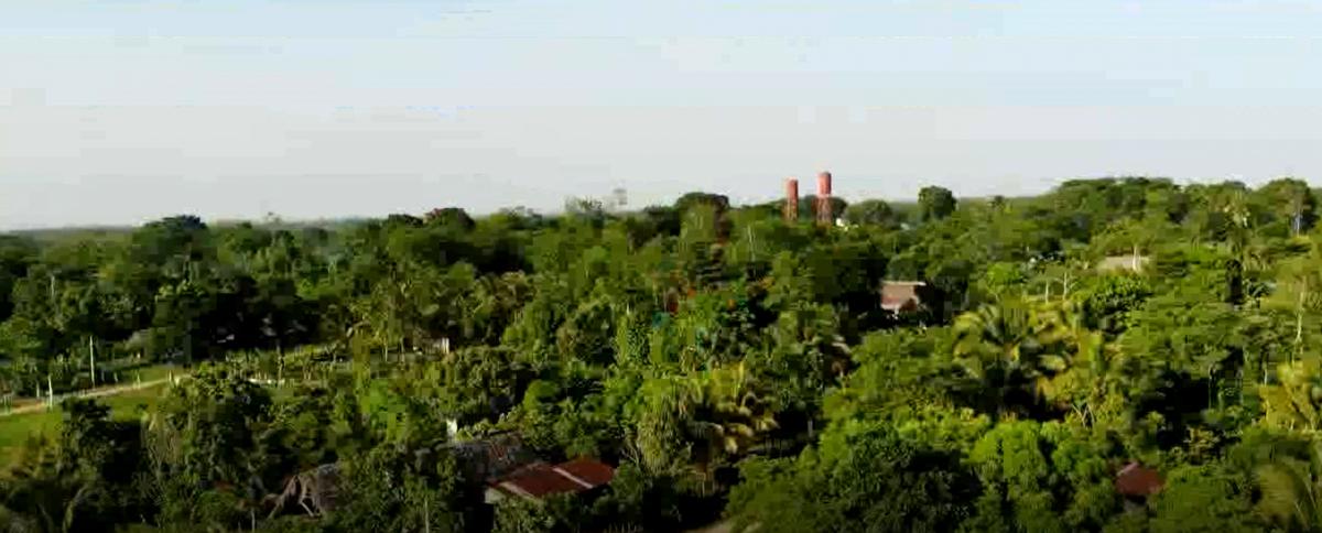 Crecimiento económico alrededor del aceite de palma imagen