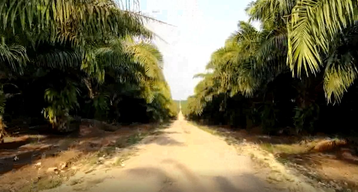 NAISA y su proyecto de palma sostenible imagen