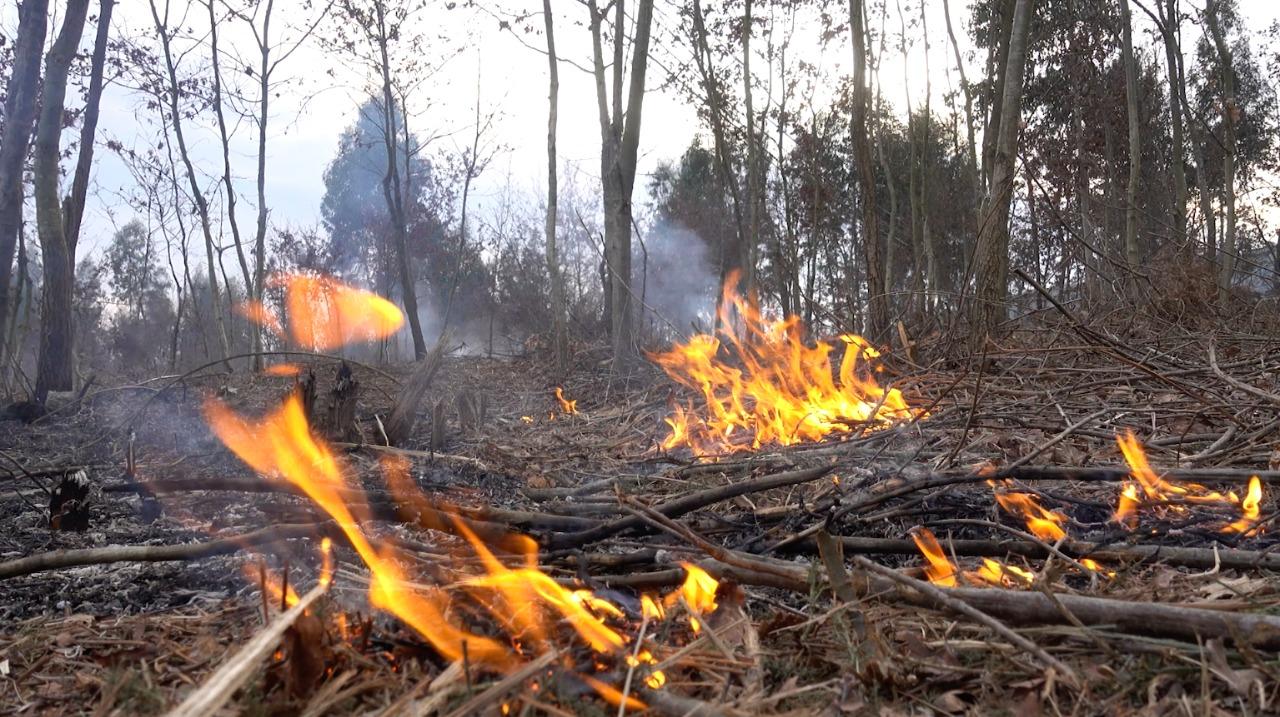 Los incendios forestales son una de las principales causas de la destrucción del Patrimonio Natural del País imagen