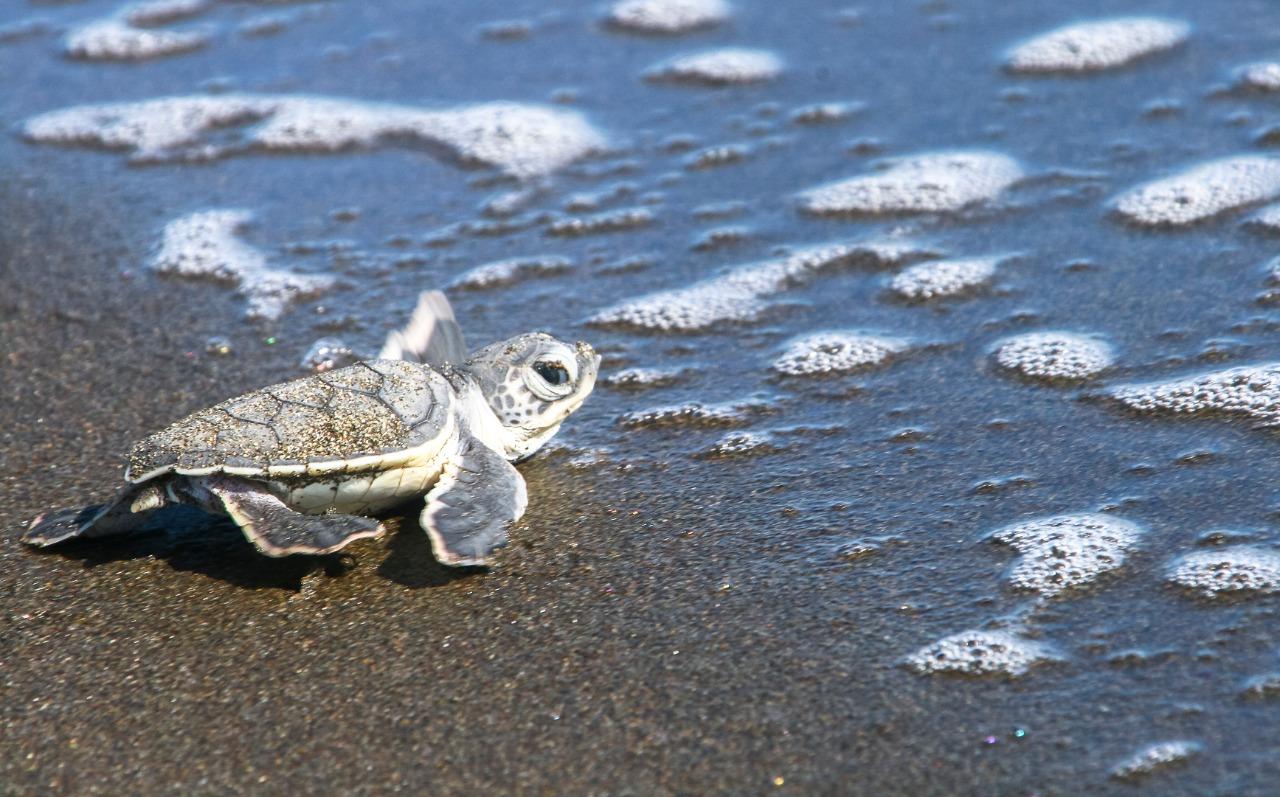 Consejos para descubrir el Pacífico de Guatemala y sus maravillas naturales imagen
