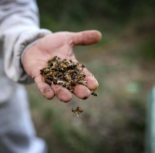 El envenenamiento de un millón de abejas en Bee Miel continúa impune imagen