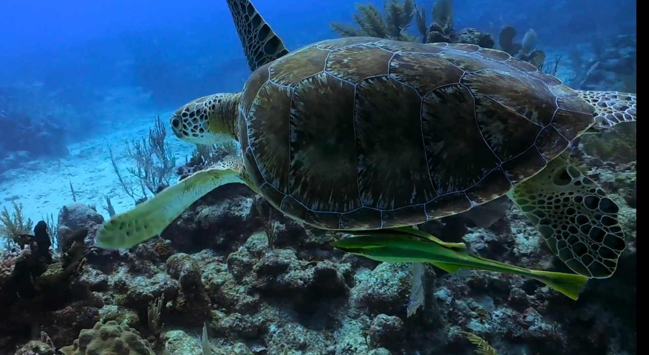 Un viaje para explorar y conservar la vida marina imagen