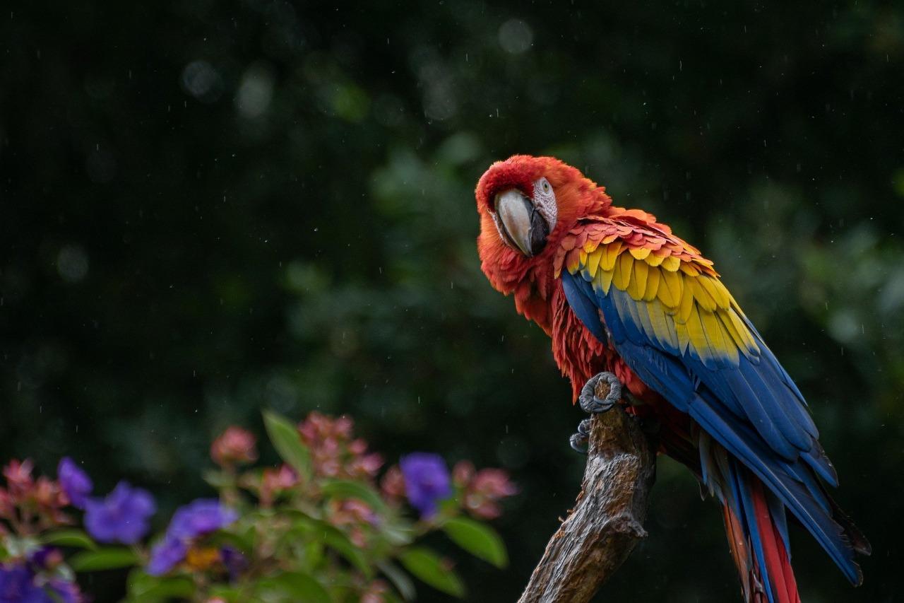 Conoce las rutas dónde puedes disfrutar avistamiento de aves imagen