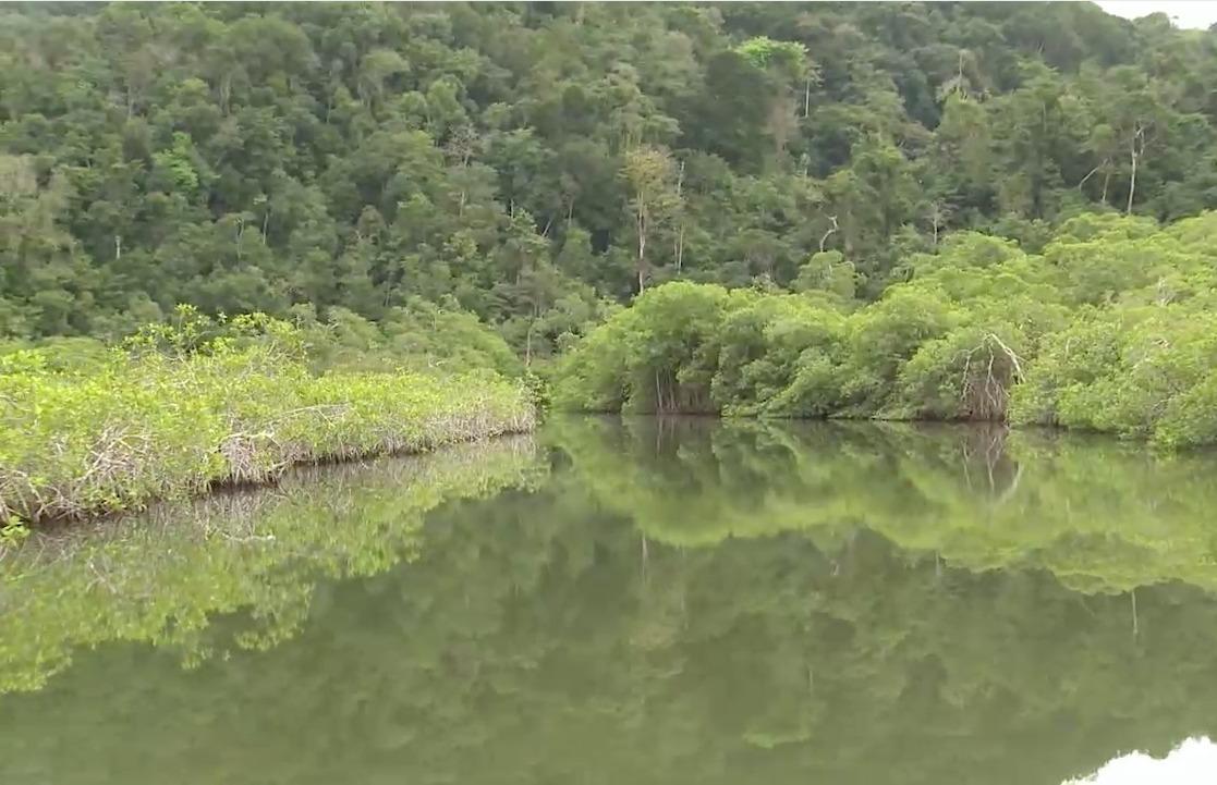 Los humedales de Guatemala imagen