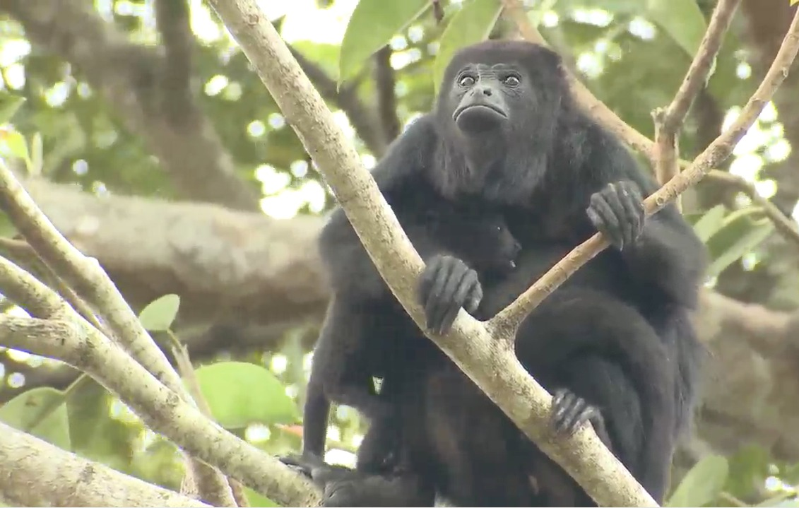 La vida silvestre de Guatemala imagen
